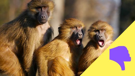 Affen sind wütend