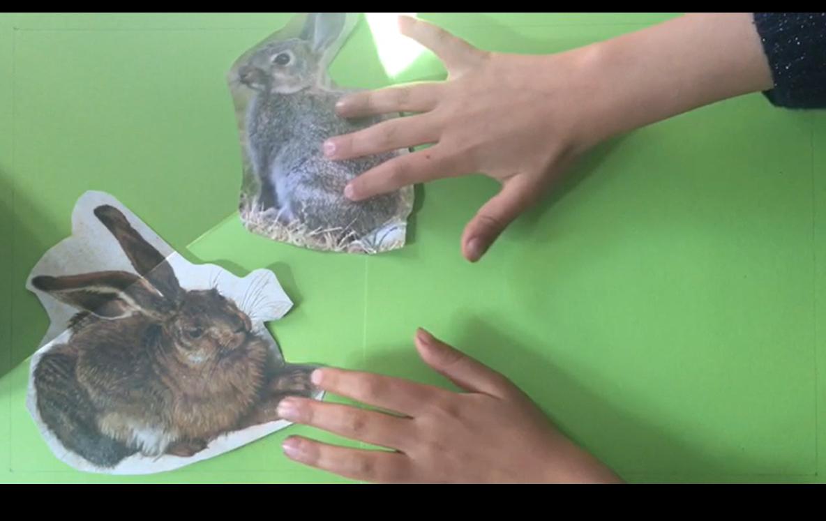 Erklärvideo Hase Kaninchen