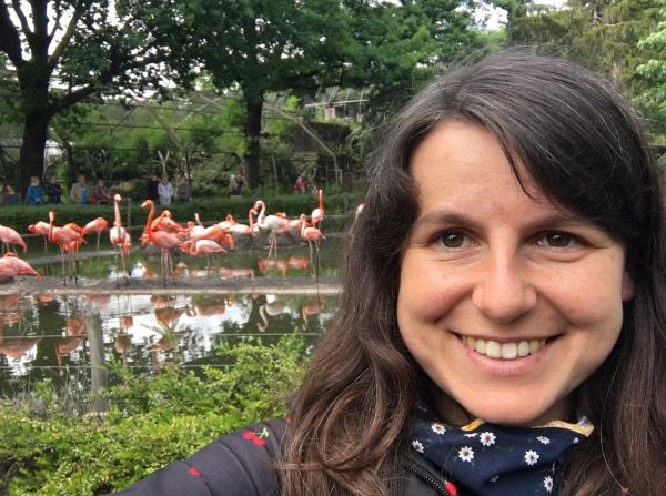 Frau und Flamingos